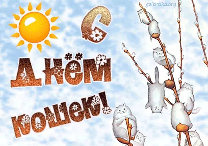 День кошек в России отмечают 1 марта 2019 года