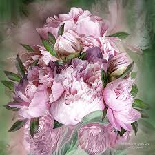 Пионы: о магии цветов