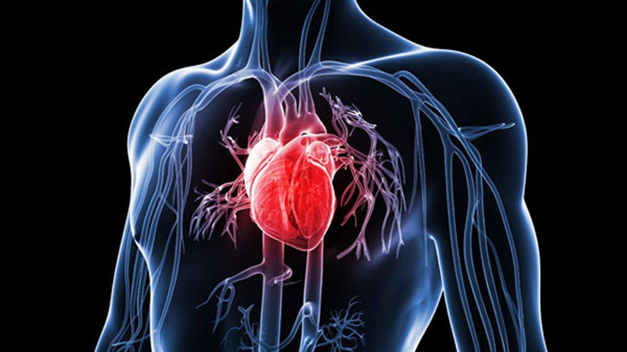 Мозг в сердце – важное оружие против стресса