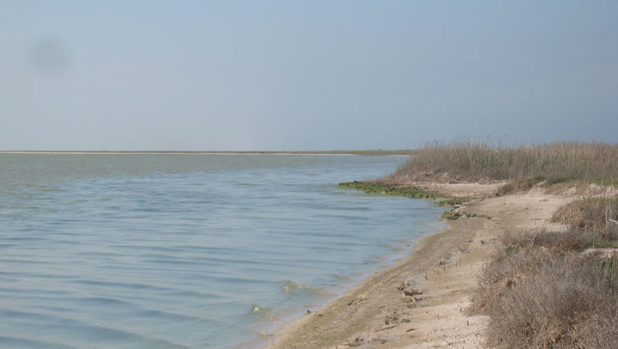Ученые выяснили, как рост солености Гнилого моря влияет на его обитателей