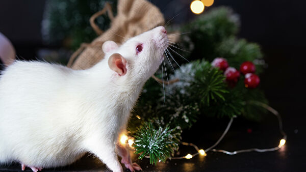 Прогноз на год Белой Крысы: гороскоп для знаков Зодиака на 2020-й