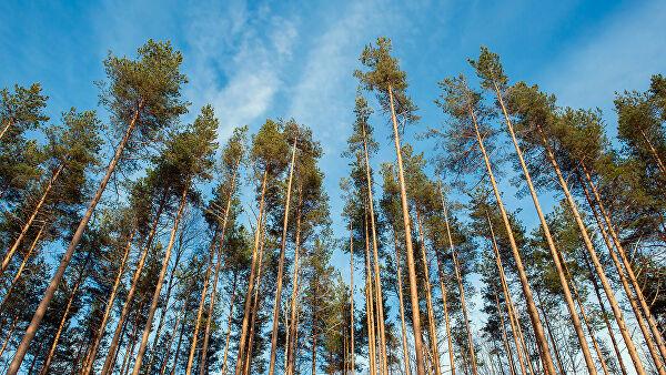 Генетики придумали, как спасти леса от глобальных изменений климата