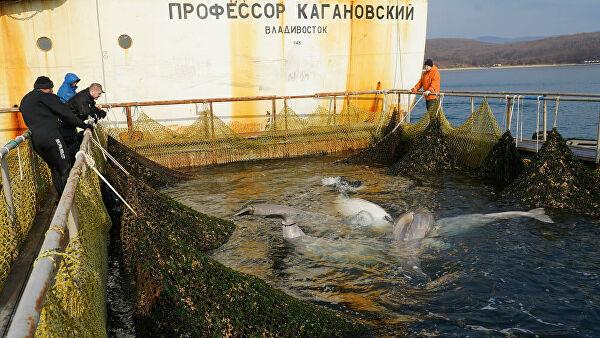 """Экологи сообщают, что """"китовая тюрьма"""" в Приморье пустует"""