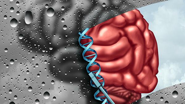 Ученые выяснили, как мозг управляет иммунитетом