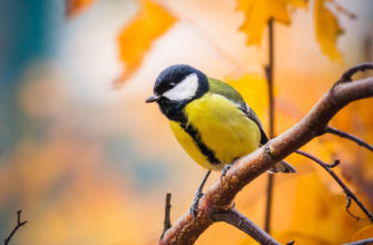 Стоит ли бояться, если синица залетела в дом? К чему это и какие еще приметы связаны с птичкой?