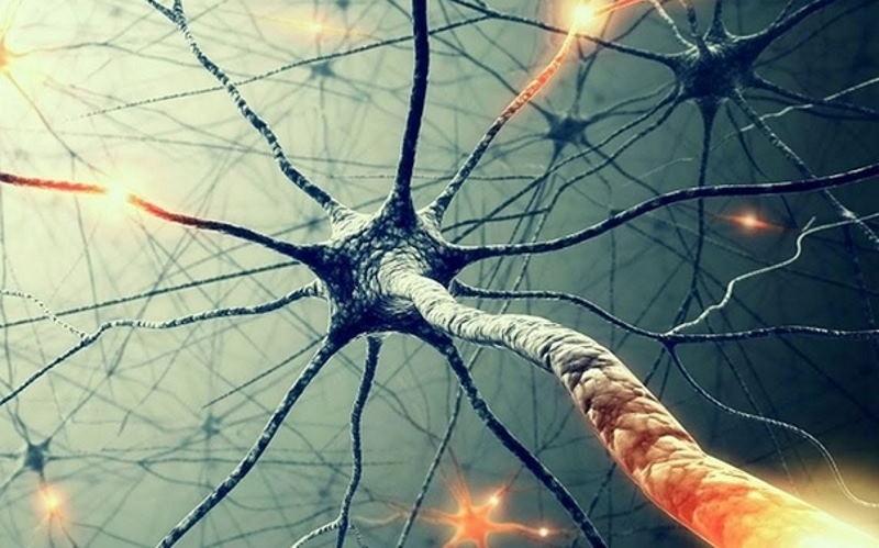 Нейроны человеческого мозга используют для создания супермощного ИИ