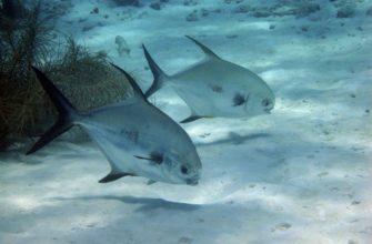 В ДНК рыб-латимерий найдены необычные гены