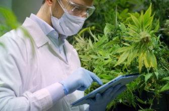 Правительство Мексики полностью легализовало марихуану