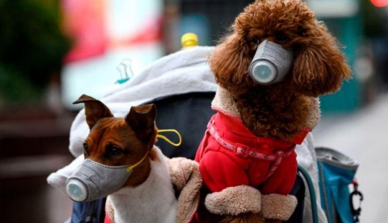 В Малайзии зафиксирован случай собачьего коронавируса у детей