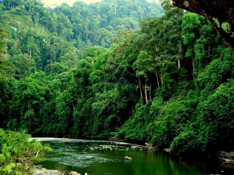 Учёные поменяли мнение о тропических лесах Амазонки: теперь они угроза