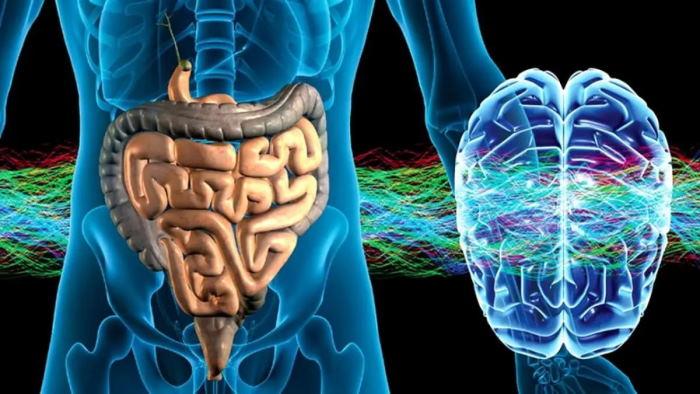 Учёные рассказали, как кишечник связан с мозгом